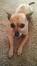 barking good, dog groomer, dog haircuts, dog bathing, dog grooming, port hueneme, ventura, oxnard,
