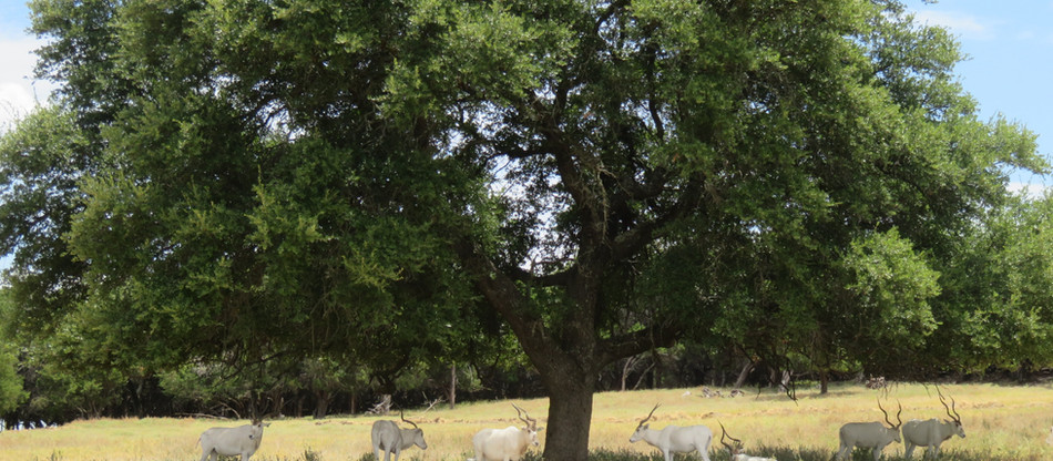 Country Living and Wildlife Just Miles from DFW