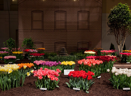 Join us at the Chicago Flower & Garden Show!