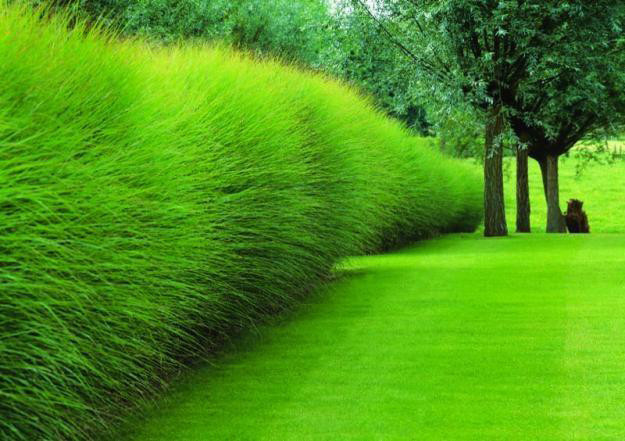 Grass hedges