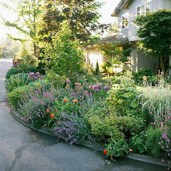 Low-maintenance native perennials
