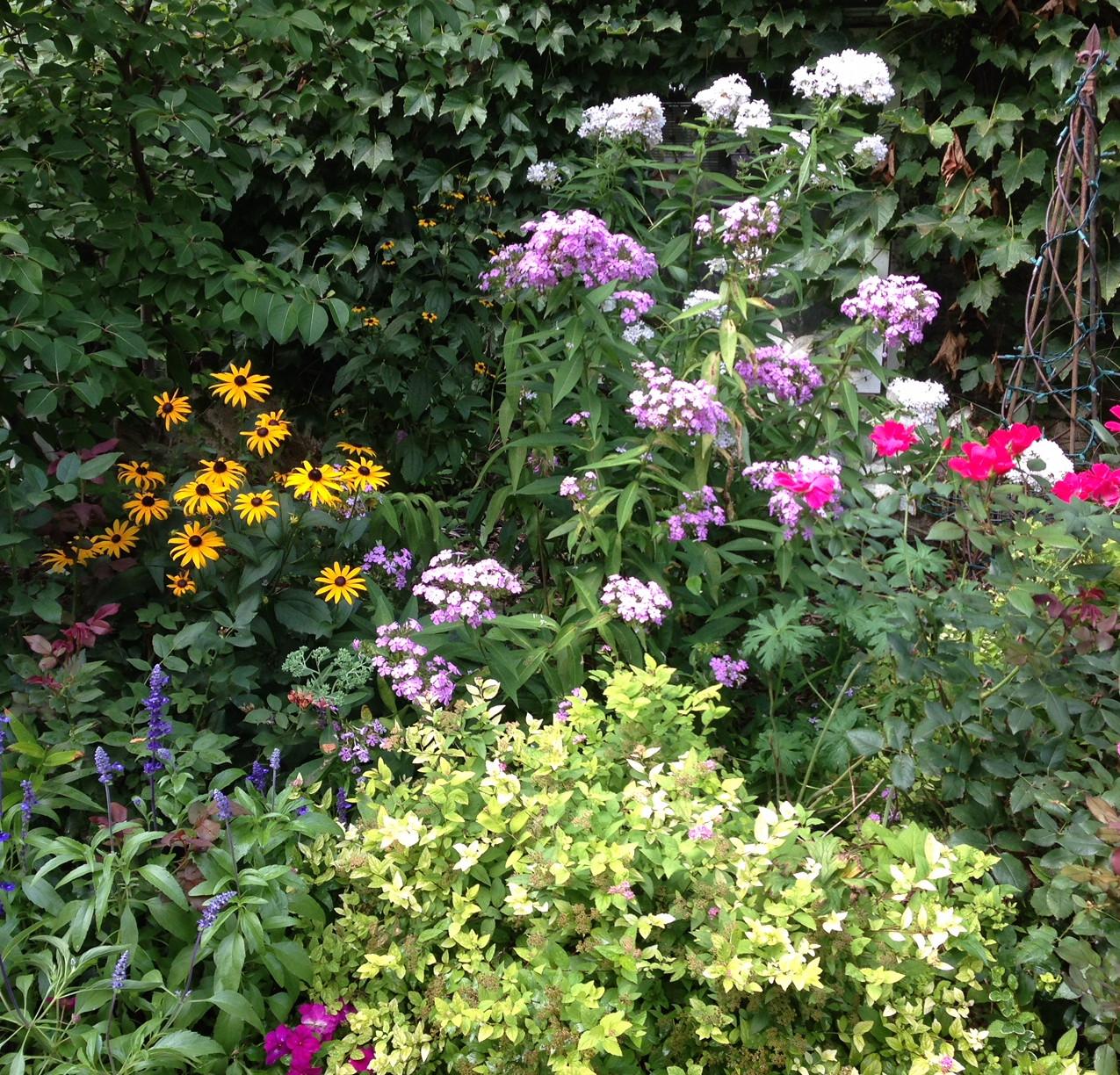 Colorful perennials