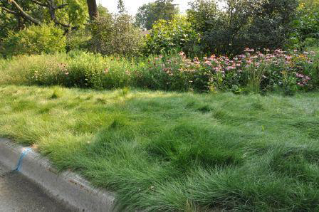 Perennial grasses in place of turf