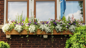 Window Boxes in the Windy City