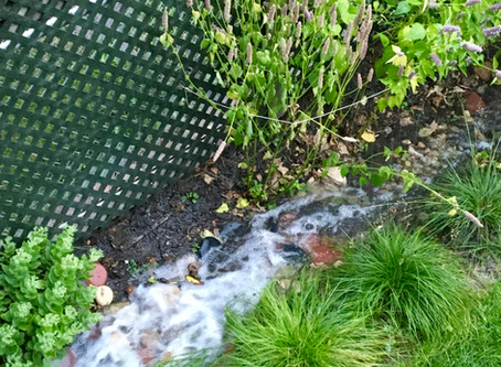 An Inspiring Rain Garden Seminar