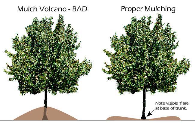 Improper vs. Proper Mulching