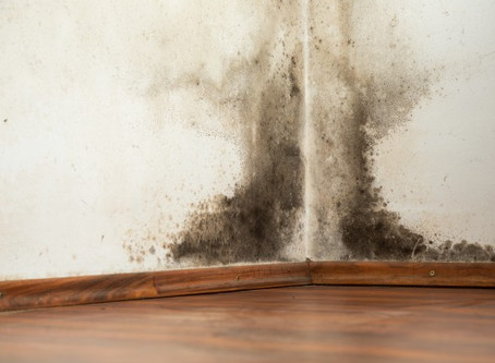 Top 10 Mold-Fighting Tips