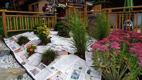 Newspaper before mulching