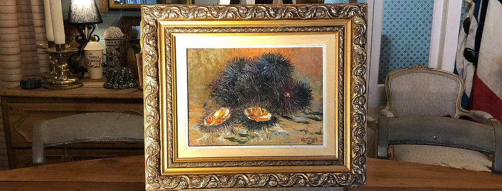 Sea Urchins still life