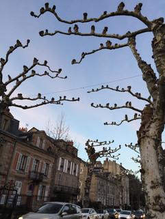 Winter Tree matinence, make a menacing feel
