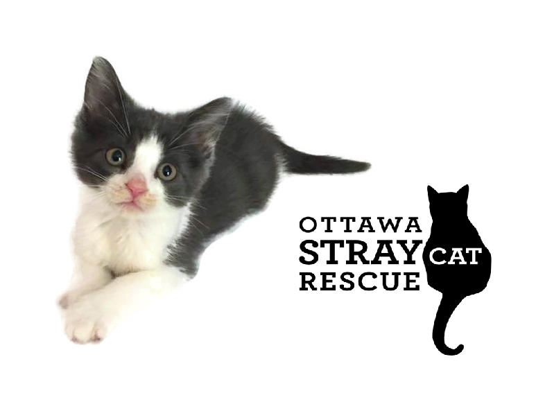 support ottawa's stray cats with the body shop
