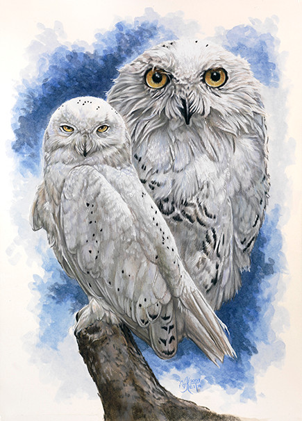 (snowy owl), 10x14 watercolor enhanced colored pencil, Original NFS