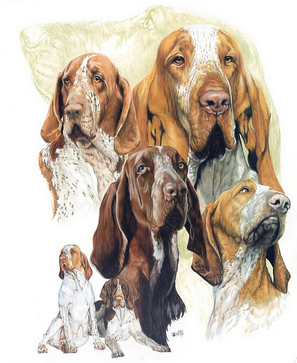 (a collage of a sporting breed), 19x24 watercolor enhanced colored pencil, Original price $600