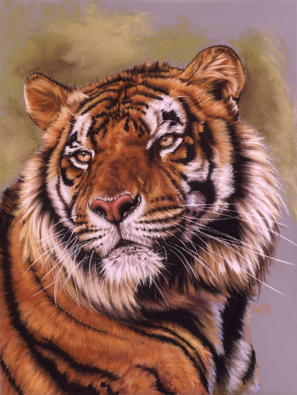 (portrait of a bengal tiger) 18x24 pastel. Original sold.