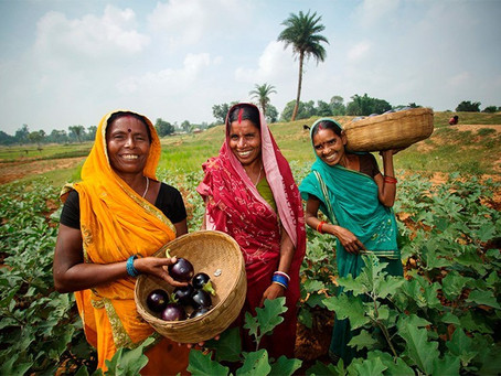 Feminization of Agriculture Sector in India