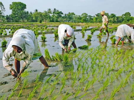 Agricultural Subsidies in India