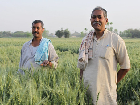 Agricultural Insurance Schemes Available for Farmers in India