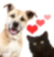 dog-and-cat-valentinemake-your-valentine