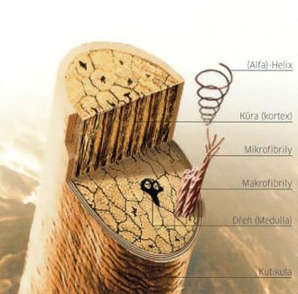 Vlas pod mikroskopem