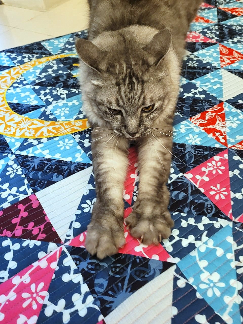 Cat Stretching on Quilt