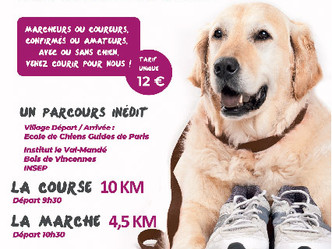 Chiens guides de Paris