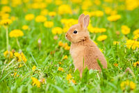 Little rabbit sitting in flowers.jpg