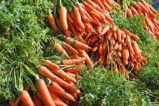 תוספי תזונה צמחיים של סאנריידר