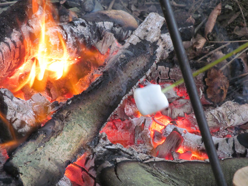 Marshmallows on the fire