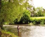 Fly fishing on the River Mole