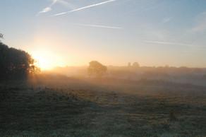 Misty morning 2