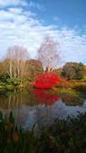 Pond at RHS Rosemoor