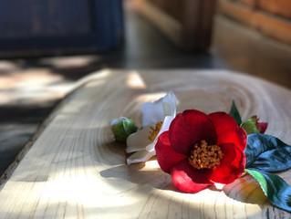 菊川の魅力をご紹介♪「早春のふぉと教室×古民家」 作品集