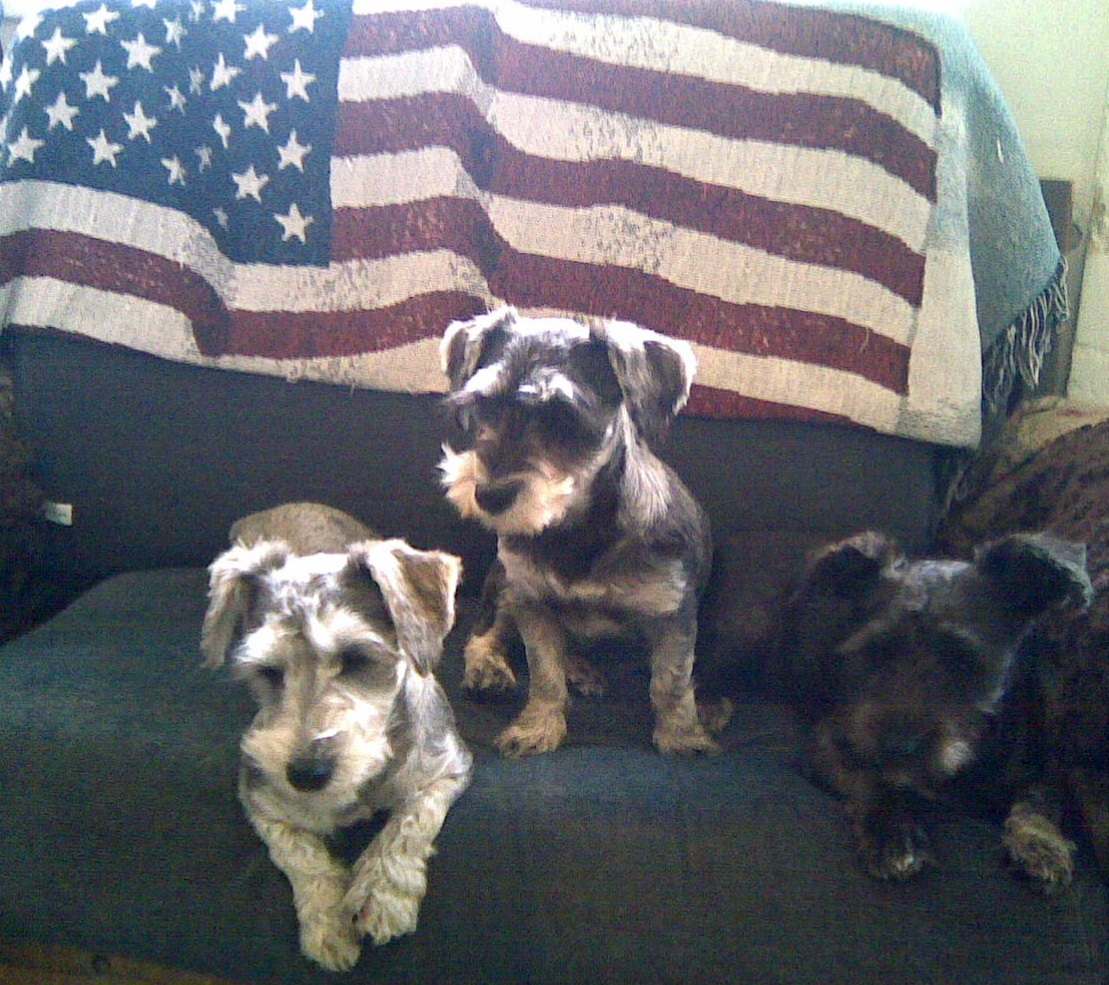 Three little patriots