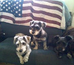 Three little patriots