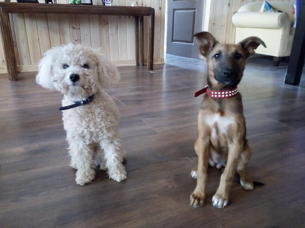 Quincy y Lola Mis tesoros perros animal de compañía amor incondicional