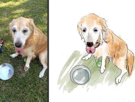 犬のイラストを描かせていただきました@遺影 イラスト