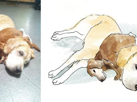 犬のイラスト描かせていただきました@遺影 イラスト 〜 イラストが仕上がるまで 〜