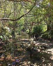 creek swims.jpg