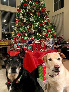 Dogs Xmas.jpg