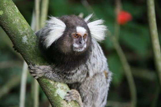 Moradores do entorno do zoológico de Guarulhos passam a receber vacina após morte de sagui