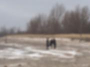 KBD_Trio Pic Buffalo.png