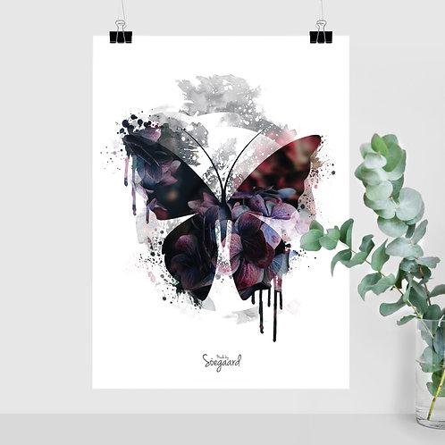 Sommerfugl A4, A3, 50x70 Mørk