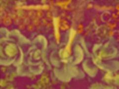 Vegetable%2520Garden_edited_edited.jpg