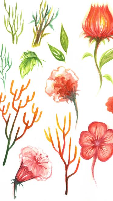 Birthday Illustration - Flowers