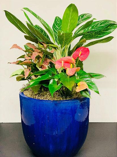 Composite Potted Plant Arrangement
