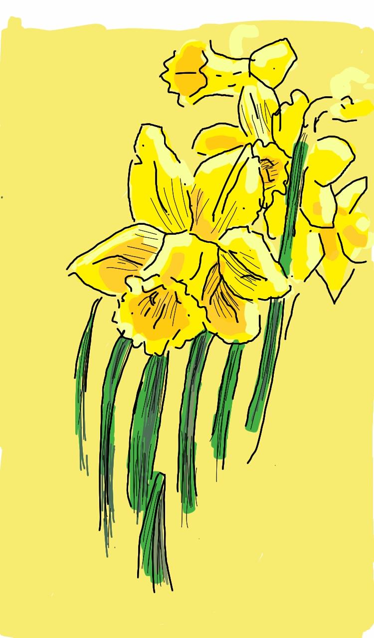 Daffodil1932016