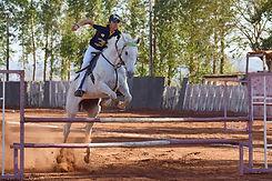 horse-4561007_1280.jpg