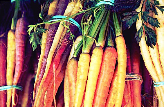 colorful carrots - are carrots hybrid foods
