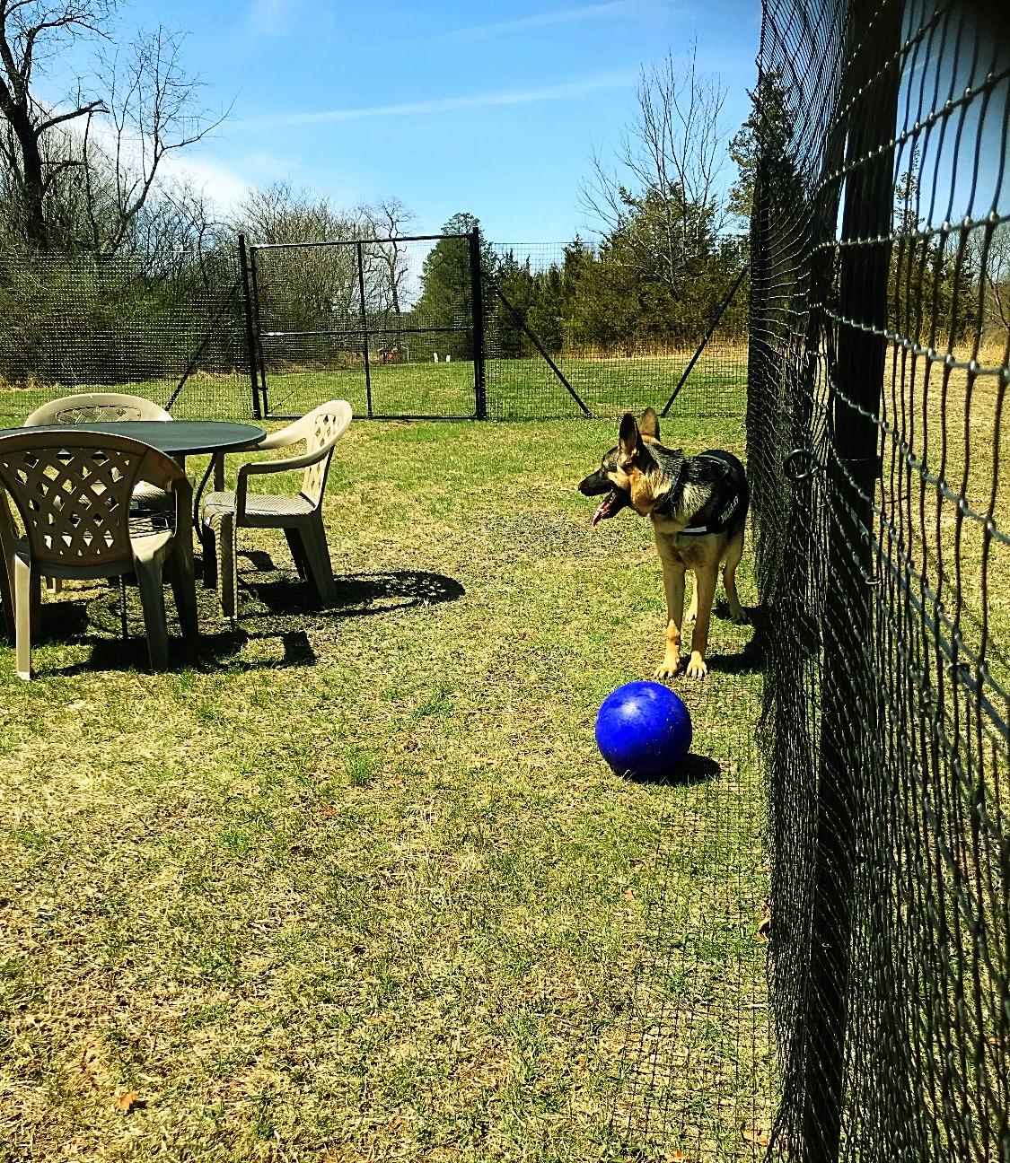 Fenced In Yard