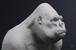 gorille-blanc-4.jpg